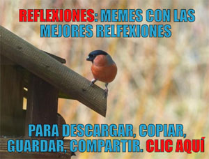 Reflexiones memes frases